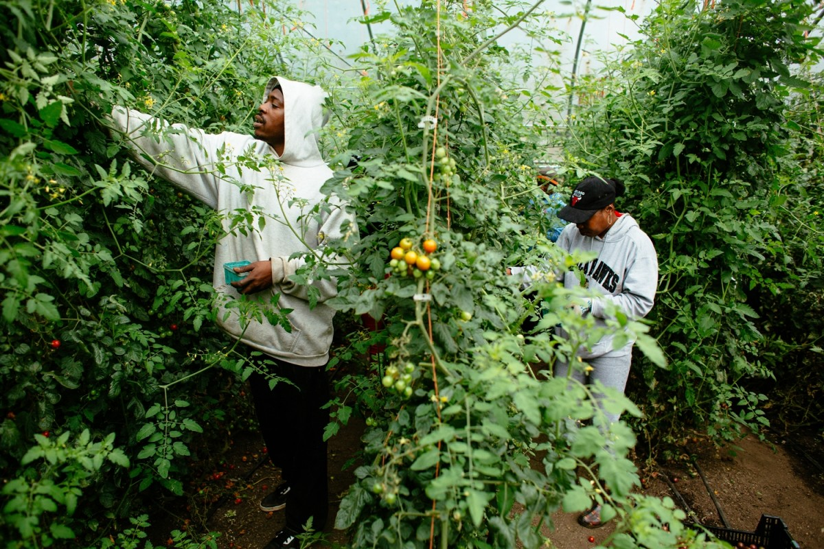 Urban Agriculture Sprouting Roots In Illinois' Legislative Soil