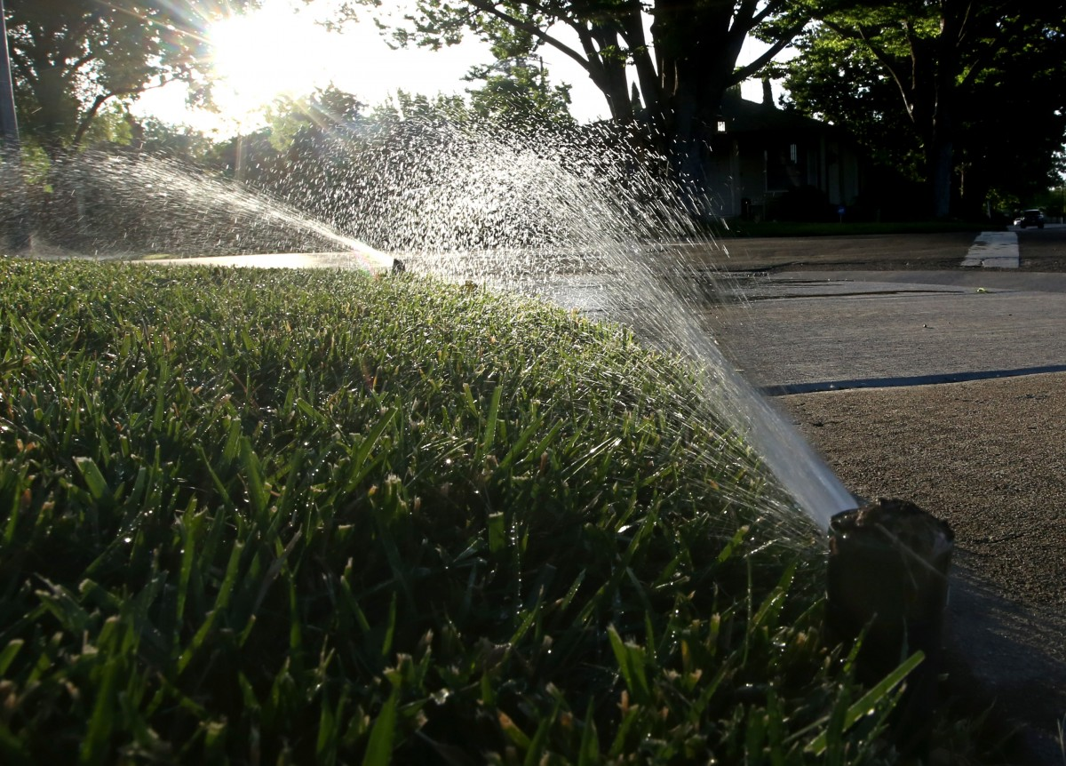 To Save Water On Lawns Plant A Tree Next City