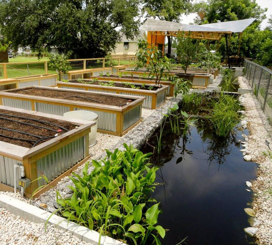 Fighting Floodwater To Grow A Garden And A Healthy New Orleans