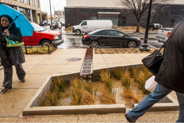 rain garden in DC