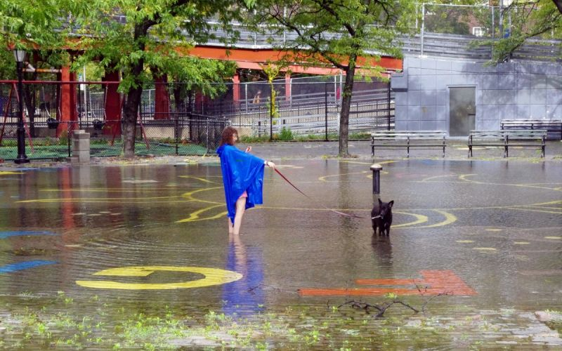 Woman walking her dog in a flooded park in New York