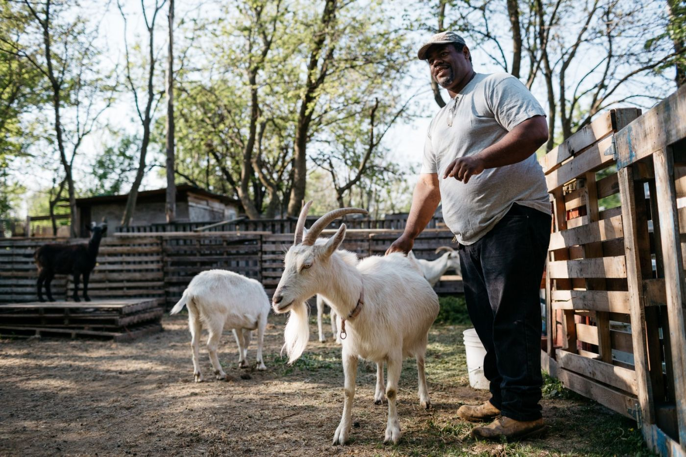 Detroit Is Designing a City With Space for Everyone, Including Goats