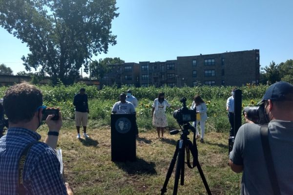 Southside Blooms sunflower farm grand opening