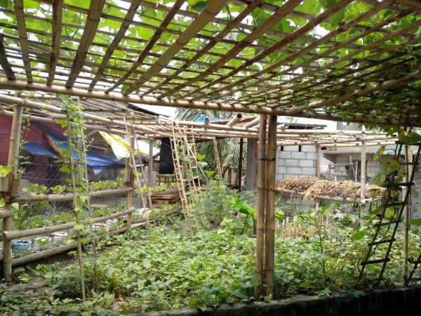Growing a nest egg through urban gardening the informal city dialogues - Square meter vegetable garden ...