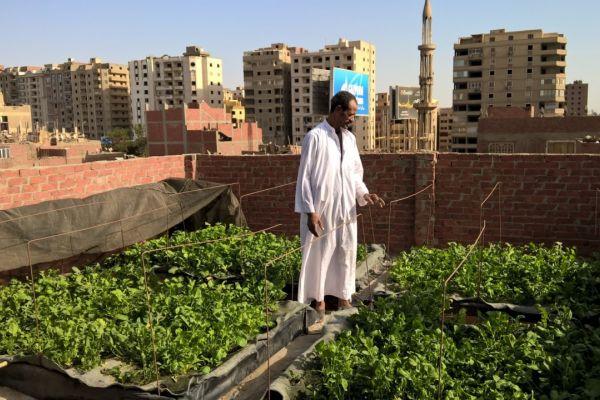Cairo rooftop garden